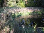 Teich am Stadtrand von Oldenburg