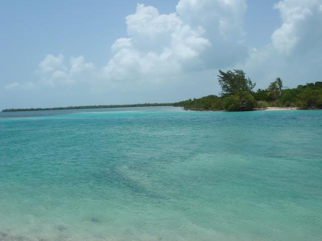 Cay Cauker