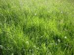 Lohfelden Wiese im Mai