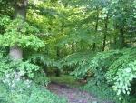 Lohfelden Laubwald