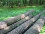 Lohfelden Wege zum Wald