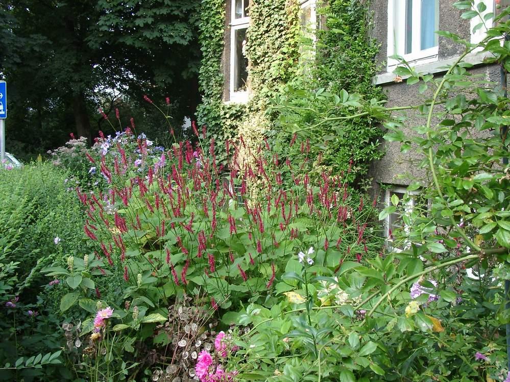 Garten 2002