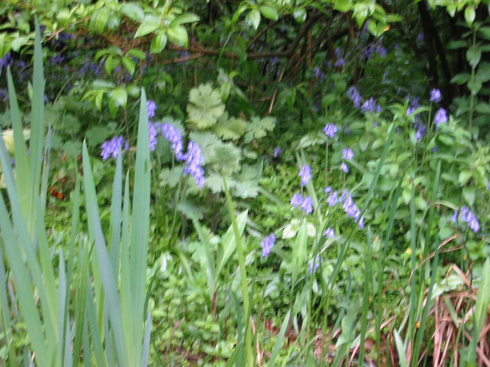 blue flowers at the pond