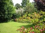 unos arbustos florecen en el junio