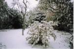 jardin con nieve 2003