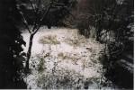 estanque del jardin en el invierno 2003
