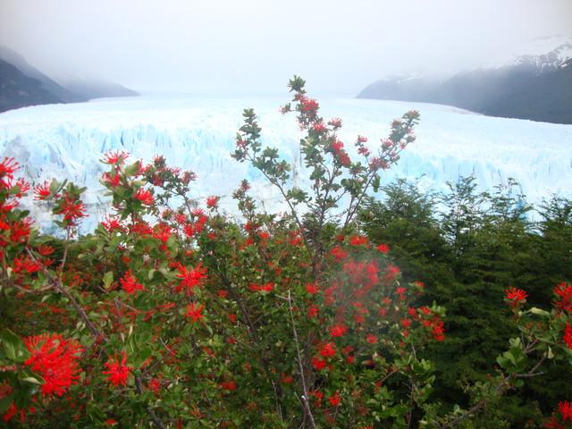 Feuerbusch und Perito Moreno