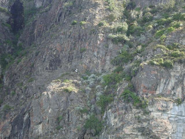 Felsen mit Condor