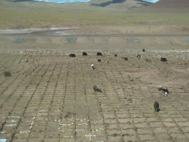 Fahrt mit der Tibetbahn: Steinbefestigungen gegen Verwehungen