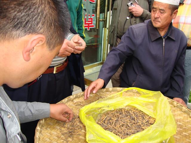 Heilkrautverkauf in Lhasa