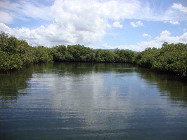 Mangrovenwald Parque National Monte Cristi