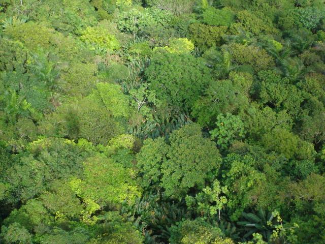Parque national Pico Isabel de Torres desde el teleferico