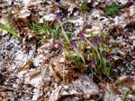 otono+invierno+primavera en el enero