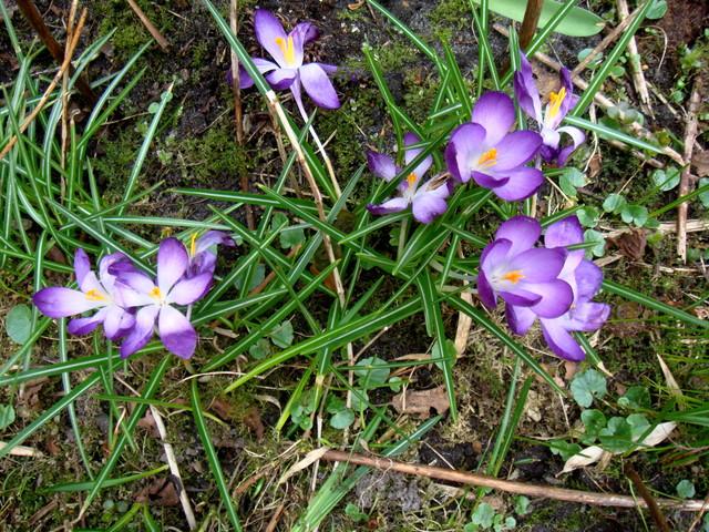 mi jardin 2012 marzo
