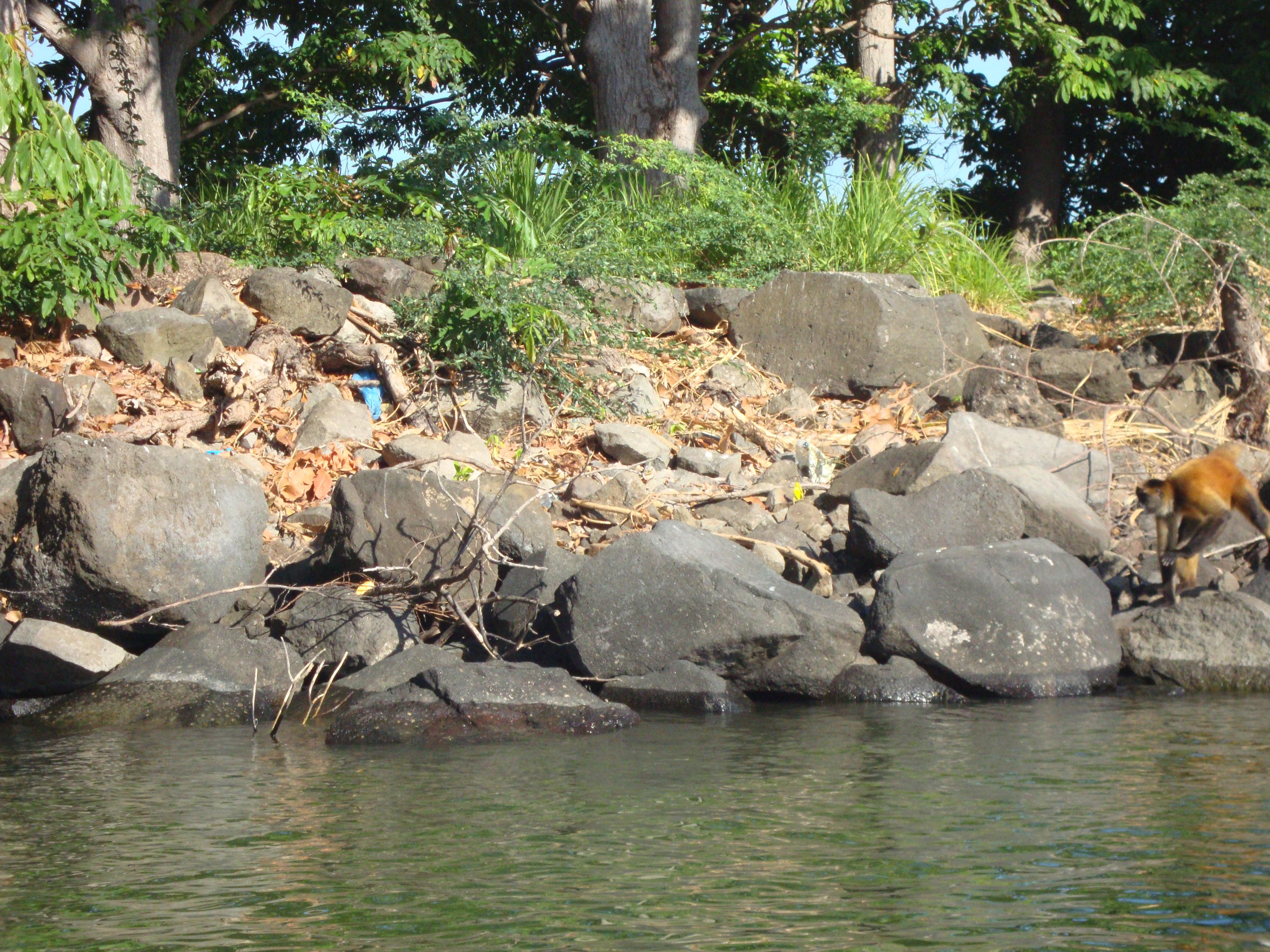 Nicaraguasee (Lago Cocibolca), isleta mit Affe