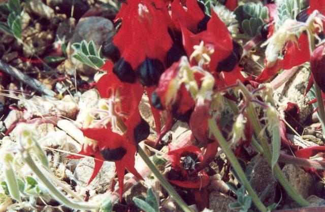 Pflanzen im zentralen Hochland