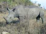 Rhinofoto von Oscars Kamera