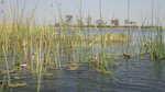Okawangodelta