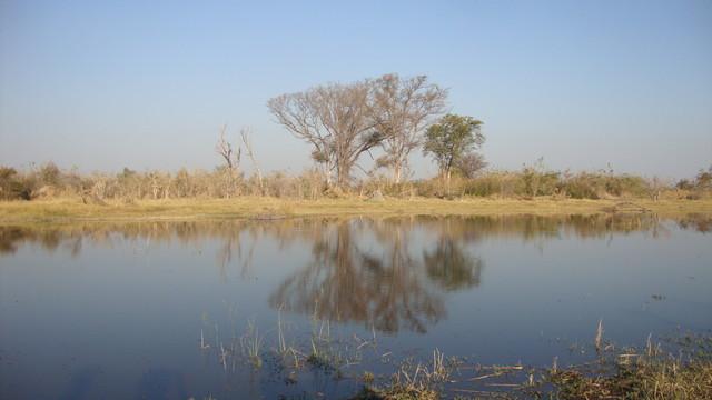 im Okawangodelta auf unserer Insel