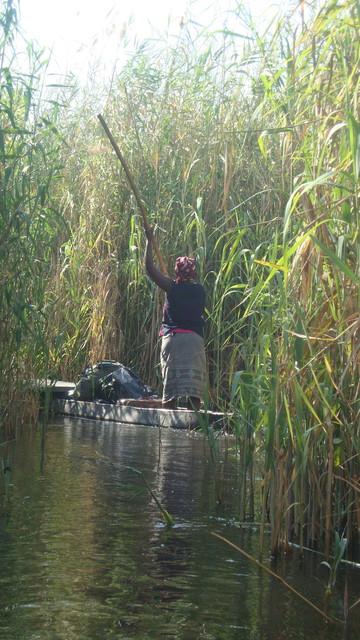 im Okawangodelta