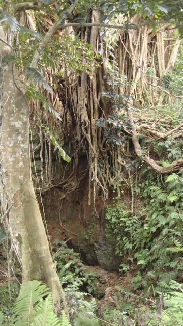 Eua Banyam Baum