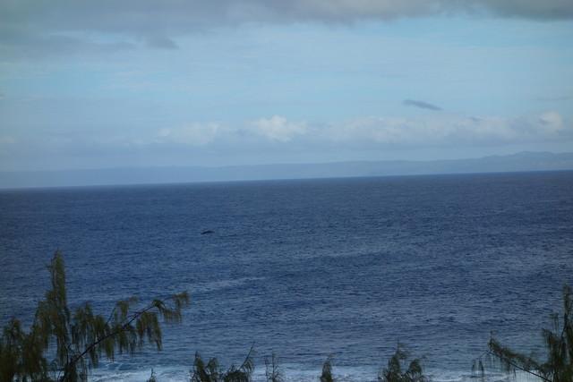 Aniwa Blick auf Wale von der Ocean View Lodge