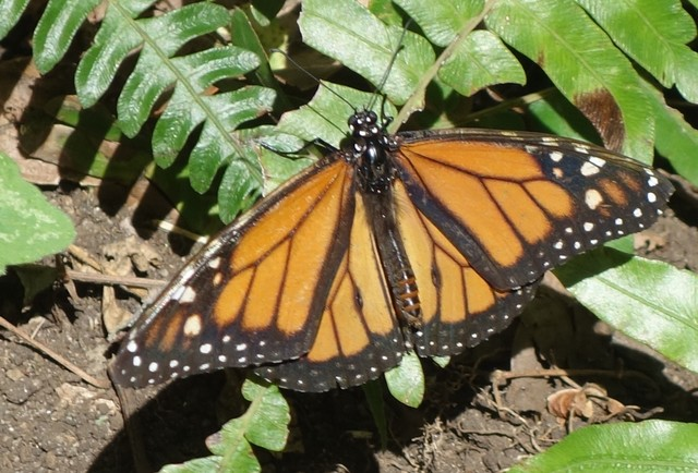 Butterfly Garden Monteverde