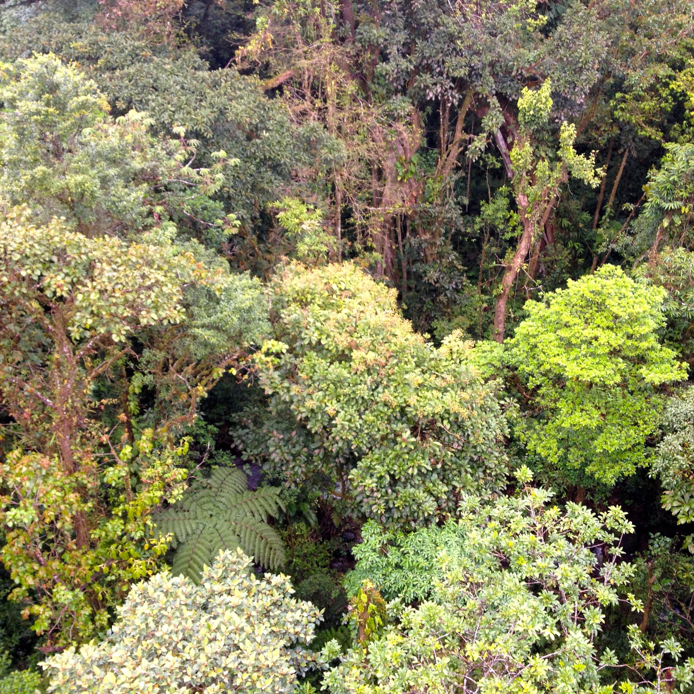 Regenwaldbrückenwanderung im Selvatura Park