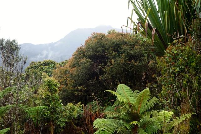 Garten der Kumul-Lodge Mount Hagen