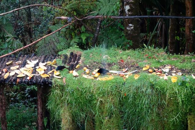 Garten der Kumul-Lodge Mount Hagen mit Vogelbeobachtungsstation