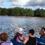 Bigi Pan, Flamingos besichtigen, Foto von Norman