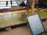 Papier mit Pflanzenabdruck wird getrocknet