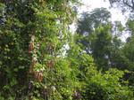 Regenwald im Nationalpark Khao Yai
