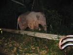 Nationalpark Khao Yai Elefantenpirsch bei Nacht