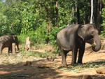 elefantencamp auf Ko chang