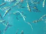 Fische vor Koh Chang