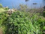 Garten Hostal Pangal