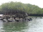 Bahia tortuga negra