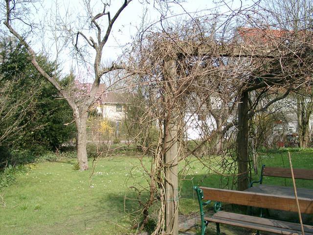 Weinlaube am 2.4.2004