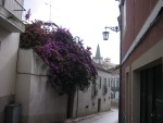 Setubal calle con flores