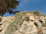 Quintero Roca